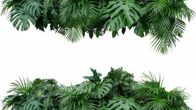 Наклейка Тропические листья листва завод куст цветочные композиции природа фон, изолированных на белом фоне, обтравочный путь включены.