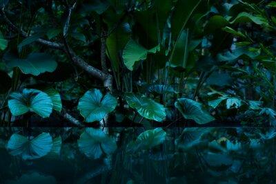 Наклейка Тропический тропический лес с водным зеркалом