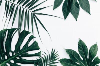 Наклейка Тропический модный фон. Листья на белом фоне