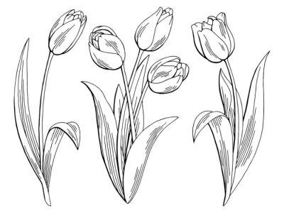 Наклейка Тюльпан цветок графический черный белый изолированных эскиз иллюстрация вектор