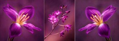 Наклейка Tulipany я Орхидея