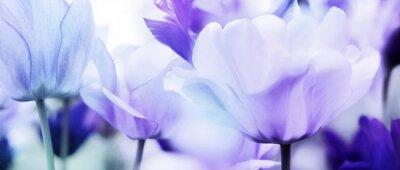 Наклейка тюльпаны голубой фиолетовый ультра легкий