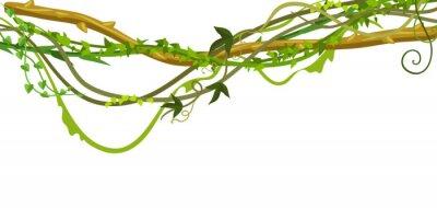 Наклейка Витая дикие лианы ветви баннер.