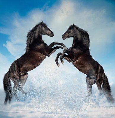 Наклейка два черных дыбы лошадей на фоне зимы