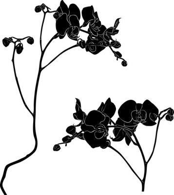 Наклейка две орхидеи ветви эскизы на белом