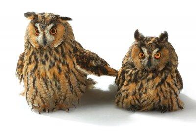 Наклейка две совы