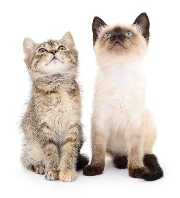 Наклейка Два маленьких котят