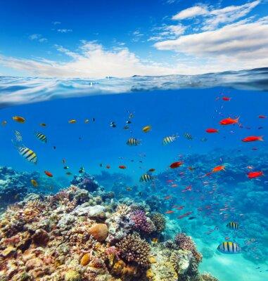 Наклейка Подводные коралловые рифы с горизонтом и водных волн