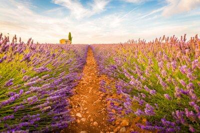 Наклейка Валенсоль, Прованс, Франция. Поле лаванды полный фиолетовые цветы