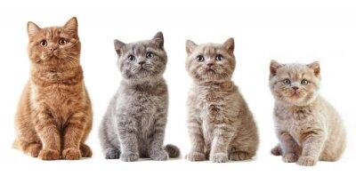 Наклейка различные британские котята