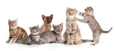 Наклейка различные кошки группа изолированных