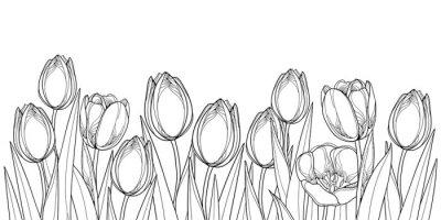 Наклейка Векторные горизонтальной границы с контуром тюльпана цветы, бутон и богато листьев в черном, изолированных на белом фоне. Контурные тюльпаны для поздравительной весны или раскраски.