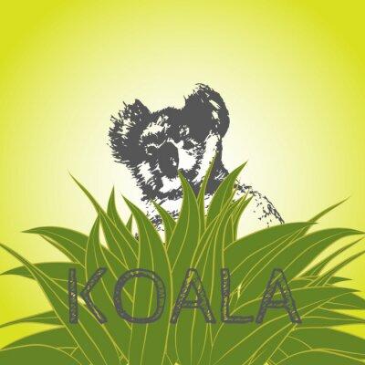 Наклейка Векторная иллюстрация Коала в листьях эвкалипта. Коала. Эвкалипт дерево.