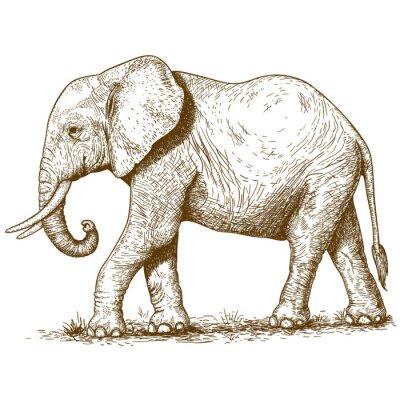 Наклейка векторные иллюстрации гравировки слона