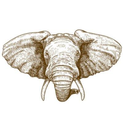 Наклейка векторные иллюстрации гравировка головой слона
