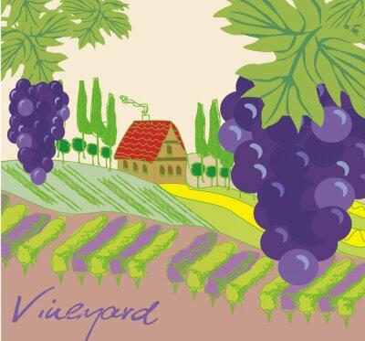 Наклейка Векторная иллюстрация винограднике