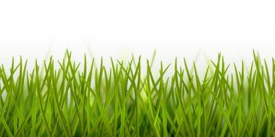 Наклейка Вектор реалистичные бесшовные зеленая трава границы или рамки на белом фоне - природа, экология, окружающая среда, садоводство шаблон