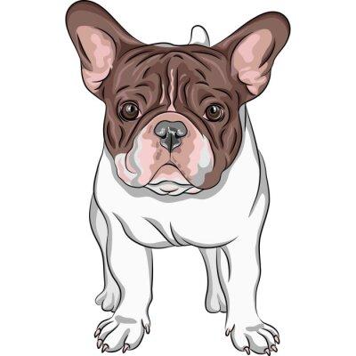 Наклейка вектор эскиз домашней собаки Французский бульдог порода