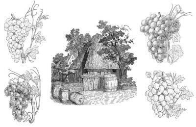 Наклейка Виноградник иллюстрация