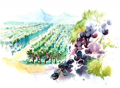 Наклейка виноградники