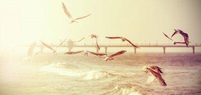 Наклейка Vintage retro stylized photo of a seagulls, old film effect.