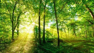 Наклейка Wald Panorama im goldenen Sonnenschein