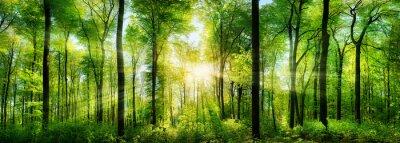 Наклейка Wald Panorama mit Sonnenstrahlen