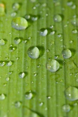 Наклейка непромока rdrops на зеленом листе