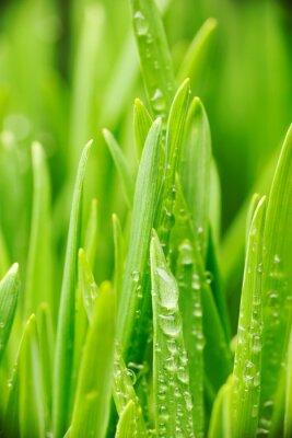 Наклейка Капли воды на траве