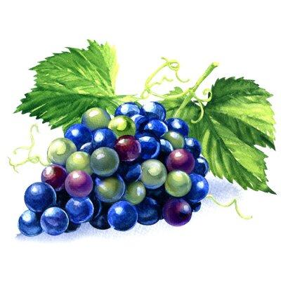 Наклейка акварель гроздь синего винограда