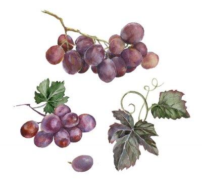Наклейка Акварель Букет из красных сортов винограда