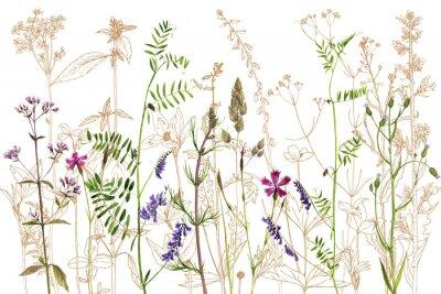 Наклейка акварель рисование цветы и растения