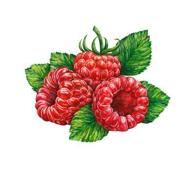Наклейка Акварель рисунок лесного малины
