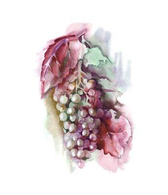 Наклейка Акварели винограда