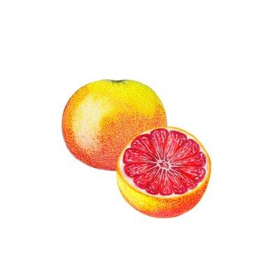 Наклейка Акварели грейпфрут