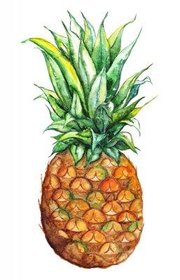 Наклейка Акварели рисованной ананас экзотический тропический фрукт, изолированных