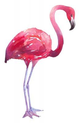 Наклейка акварель иллюстрации фламинго
