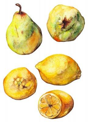 Наклейка Акварели лимон цитрусовых груши фрукты набор изолированных