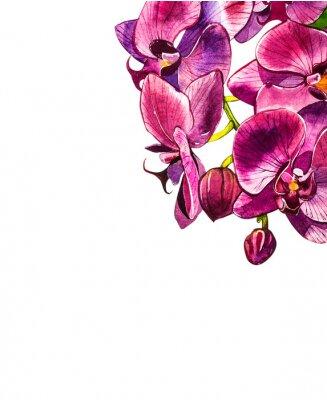 Наклейка Флора Акварельные иллюстрации, ботаническая живопись, рука рисунок.