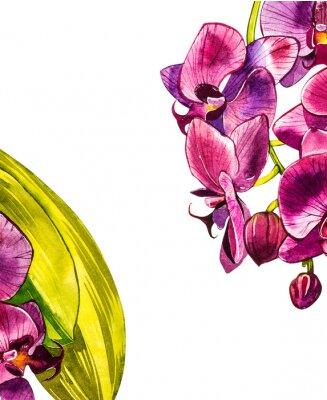 Наклейка Акварель орхидеи филиал, рисованной цветочные иллюстрации, изолированные на белом фоне. Флора Акварельные иллюстрации, ботаническая живопись, рука рисунок.
