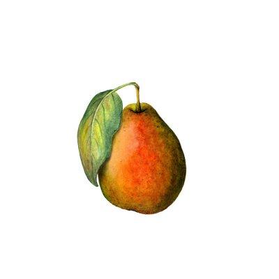 Наклейка Акварели груша