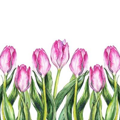 Наклейка Акварельная розовая рамка с тюльпанами