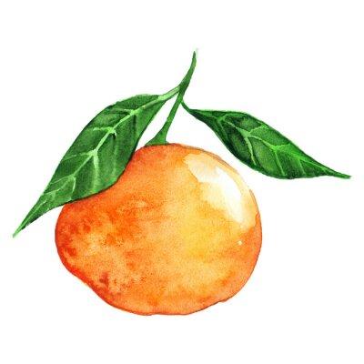 Наклейка Акварели спелых оранжевый мандарин цитрусовых фруктов, изолированных