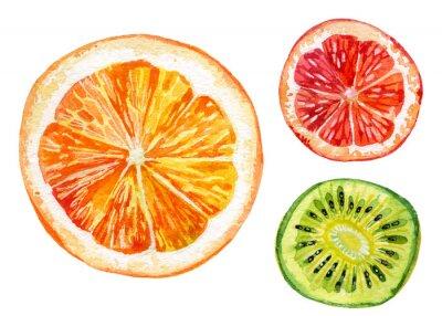 Наклейка Акварельный набор свежего апельсинового, киви и грейпфрут