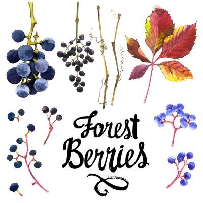 Наклейка Акварельный набор дикого винограда. Сбор гербария сада.