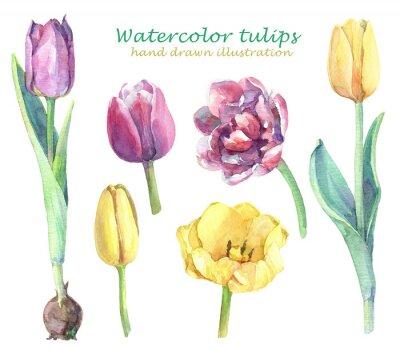 Наклейка Акварель набор желтых, фиолетовых и розовых тюльпанов.