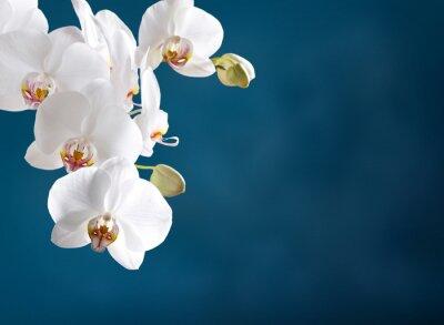 Наклейка Белая орхидея