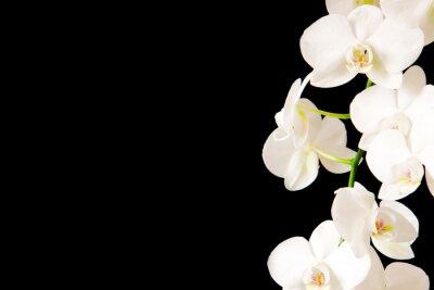 Наклейка White  Orchid Branch.