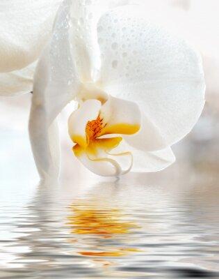 Наклейка Белая орхидея. Близком расстоянии с отражением в воде.