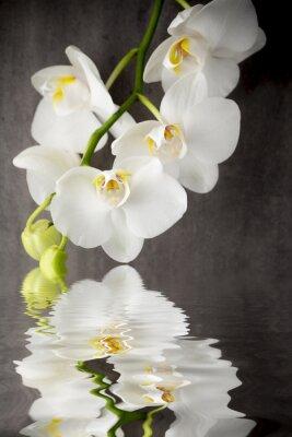 Наклейка Белая орхидея на сером фоне.